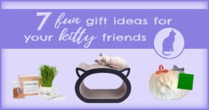7 gift ideas for cats