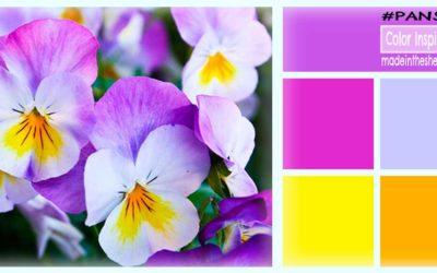 color inspiration: springtime pansies